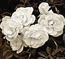 Platinum Roses by Bob Wall