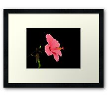 Pink shadow Framed Print