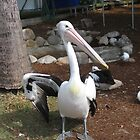 Pelican by gaylene goodsell