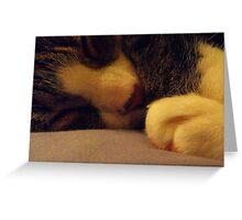 sleeping cat Greeting Card