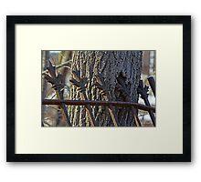 Tree & Fence, Inc. Framed Print
