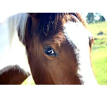 The Caring Eye of the Gentle Pinto Filly Savanna Photographic Print