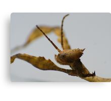 Cropped Insect Canvas Print