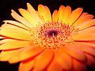 A Simple Beauty by rhian mountjoy