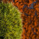 Moss by Lesley Williamson