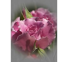 Rose With Embossing Around It Photographic Print