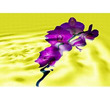 Reflections of Moth Orchid Photographic Print
