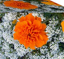 Marigolds Cubed by Sherry Seely