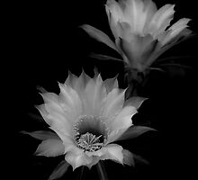 white flower by fotomagique