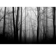 The Forest and the Fog 2 Photographic Print