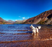 Bailey @ Wastwater by Paul Thompson Photography