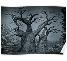 Baobab Tree, Kilimanjaro Safari, Orlando, Florida Poster