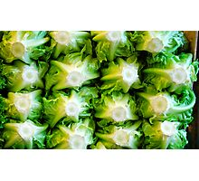 Cool Green Heads Prevail! Photographic Print