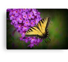 Beautiful Swallowtail on Butterfly Bush Canvas Print