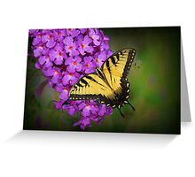 Beautiful Swallowtail on Butterfly Bush Greeting Card