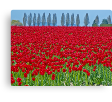 Spring in Skagit Valley Canvas Print