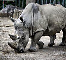 Rhino ... by SNAPPYDAVE