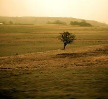 solitude by JulieSaunders