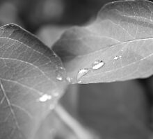 Drops fallen on leaves by Tanja Katharina Klesse