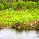 Florida's Wildlife by Judy Gayle Waller