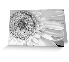 Pure Daisy Greeting Card