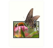 Eastern Swallowtail Butterfly Art Print