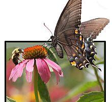Eastern Swallowtail Butterfly by Deb Snelson