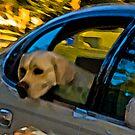 Dog Gone! by gregvm