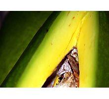 Aguacate / Avocado Photographic Print