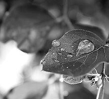 Drops of water by Tanja Katharina Klesse