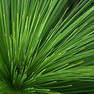 Grass Tree by Alex Evans