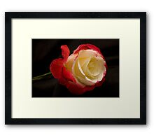 Autumn Rose  Framed Print
