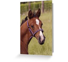Portrait of a Playful Young Foal  Greeting Card