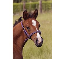 Portrait of a Playful Young Foal  Photographic Print