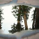 Reflection by Sara Wood