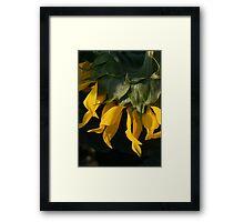 Sunny Side Down Framed Print