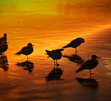 Shore Birds by Barbara  Brown