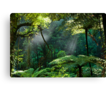 Morning Mist. Canvas Print