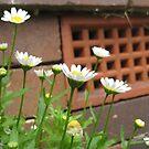 Daisy, Daisy by Ellavon