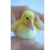 Tiny Duckling Photographic Print