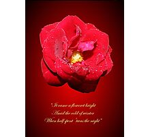 Lo how a rose e'er blooming Photographic Print