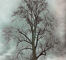 Bare Beauty of Winter by Charldia