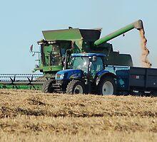 Harvesting wheat by woolleyfir
