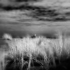 amongst the dunes by dennis william gaylor