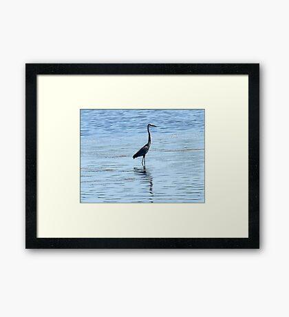 Heron Hunt Framed Print