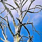 Tired Mountain Ash Giant by Lynne Kells (earthangel)
