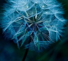 Soft'n Blue by Johanne Brunet