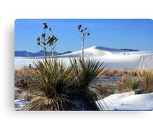 Yuccas and White Sands Canvas Print