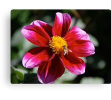 White Tipped Beauty Canvas Print