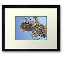 Chameleon Understudy Framed Print